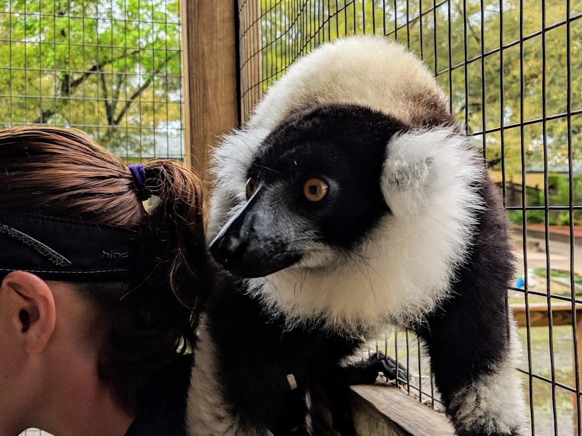 gulf shores zoo lemur encounter