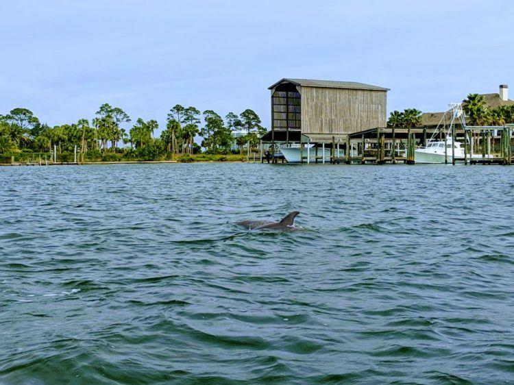 orange beach dolphins