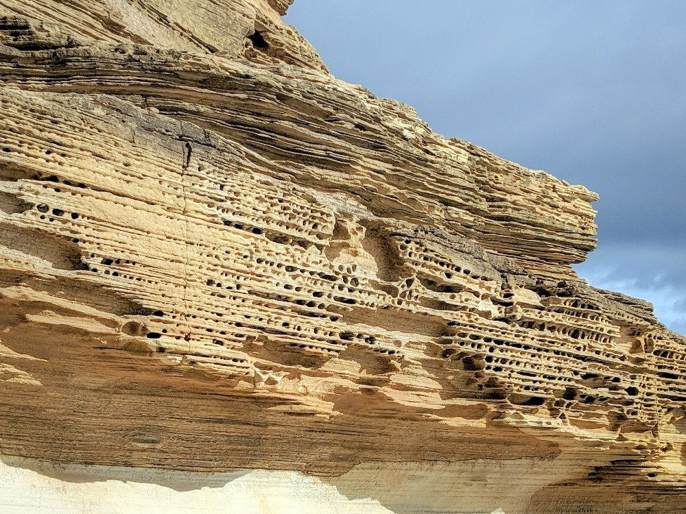 Closeup of the honeycomb formations on tasmania Painted Cliffs