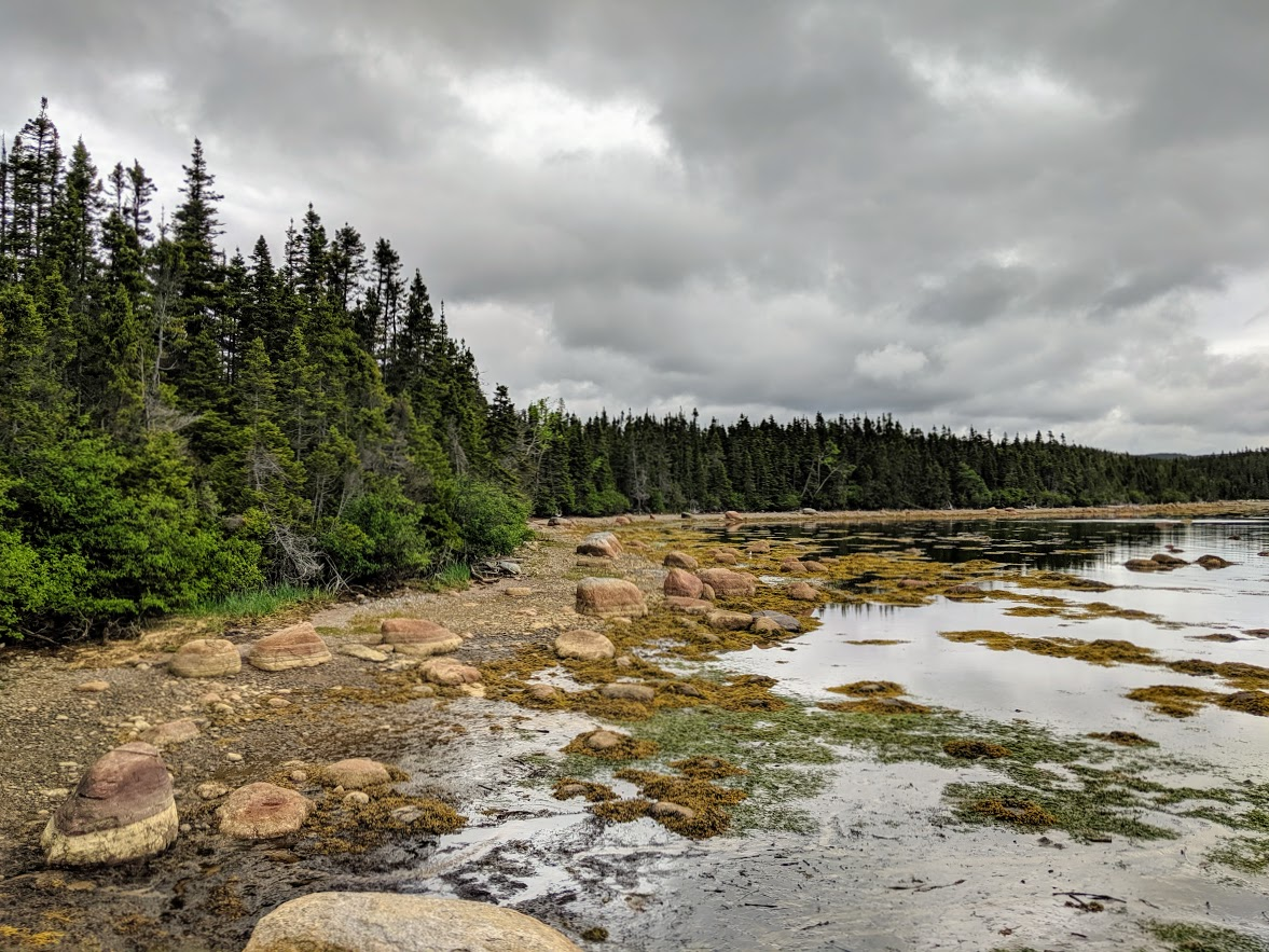 pine trees on a lake in newfoundland canada