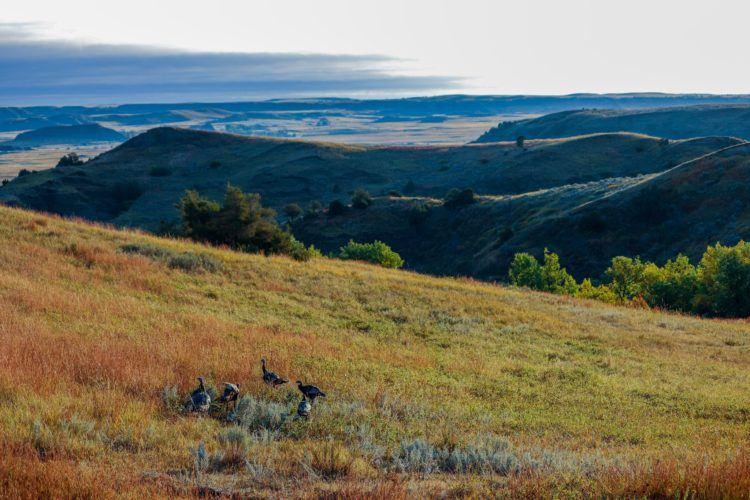 birds in north dakota national park