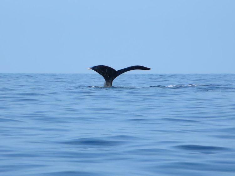 whale tail on the big island hawaii