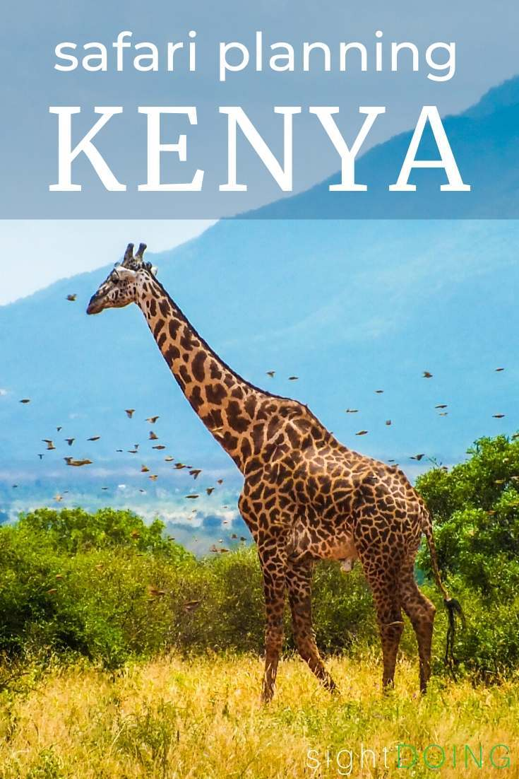 kenya safari planning pinterest image