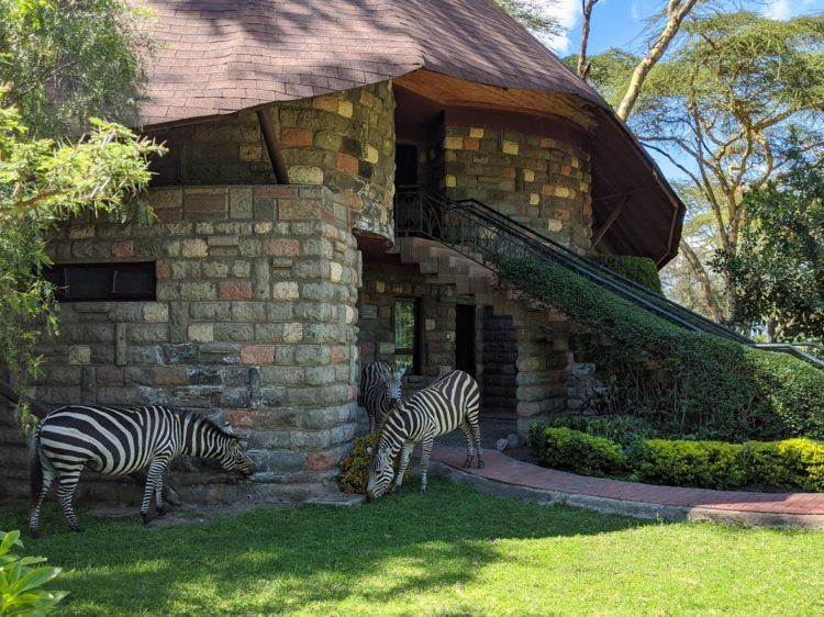 zebra at sopa lodge
