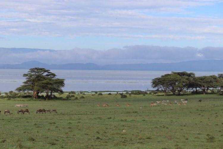 overlooking lake naivasha