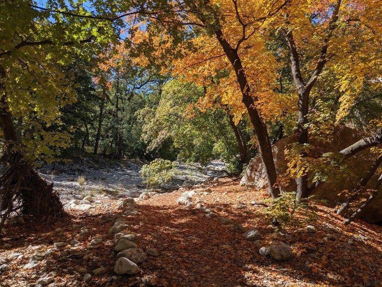 Mckittrick canyon fall colors