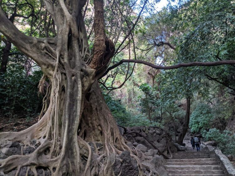 stairway to tepozteco