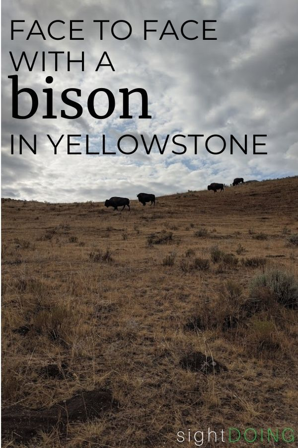 bison in yellowstone pin