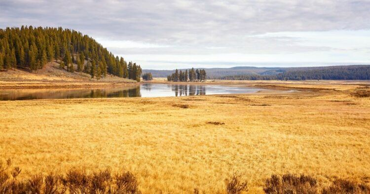 riverside scene at yellowstone in fall