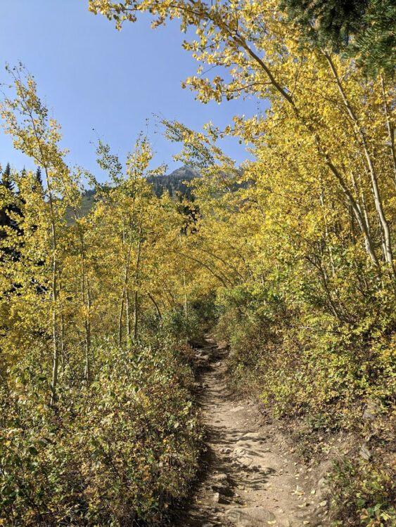 yellow aspens wyoming