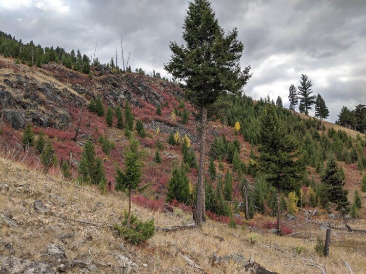 yellowstone fall colors on hill