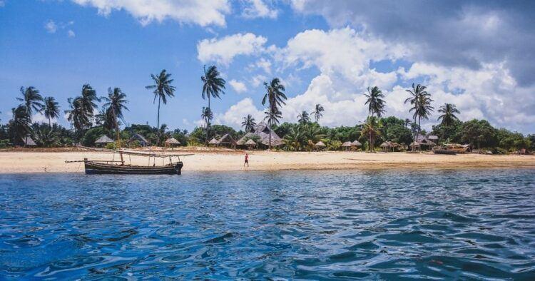 mafia island palm trees