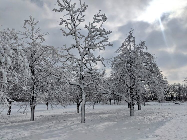 trees covered with ice and snow