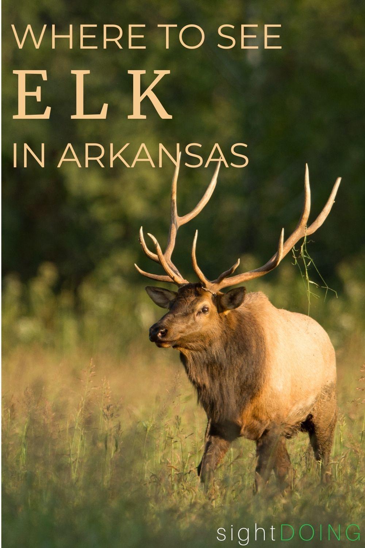 pinterest where to see elk in arkansas