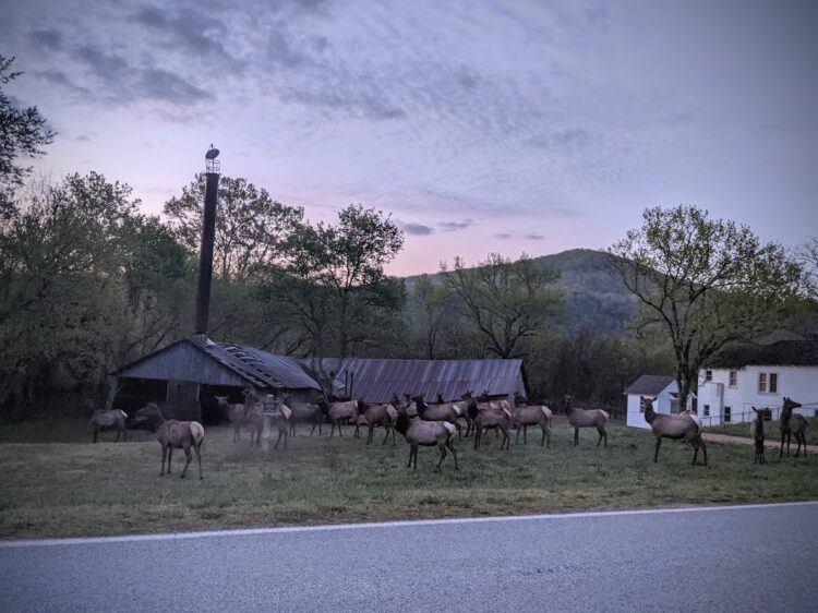 elk near boxley church